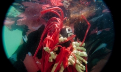 lisu_part2_underwater-66-of-79